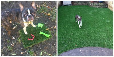 Top Dog Turf Dog friendly artificial turf London