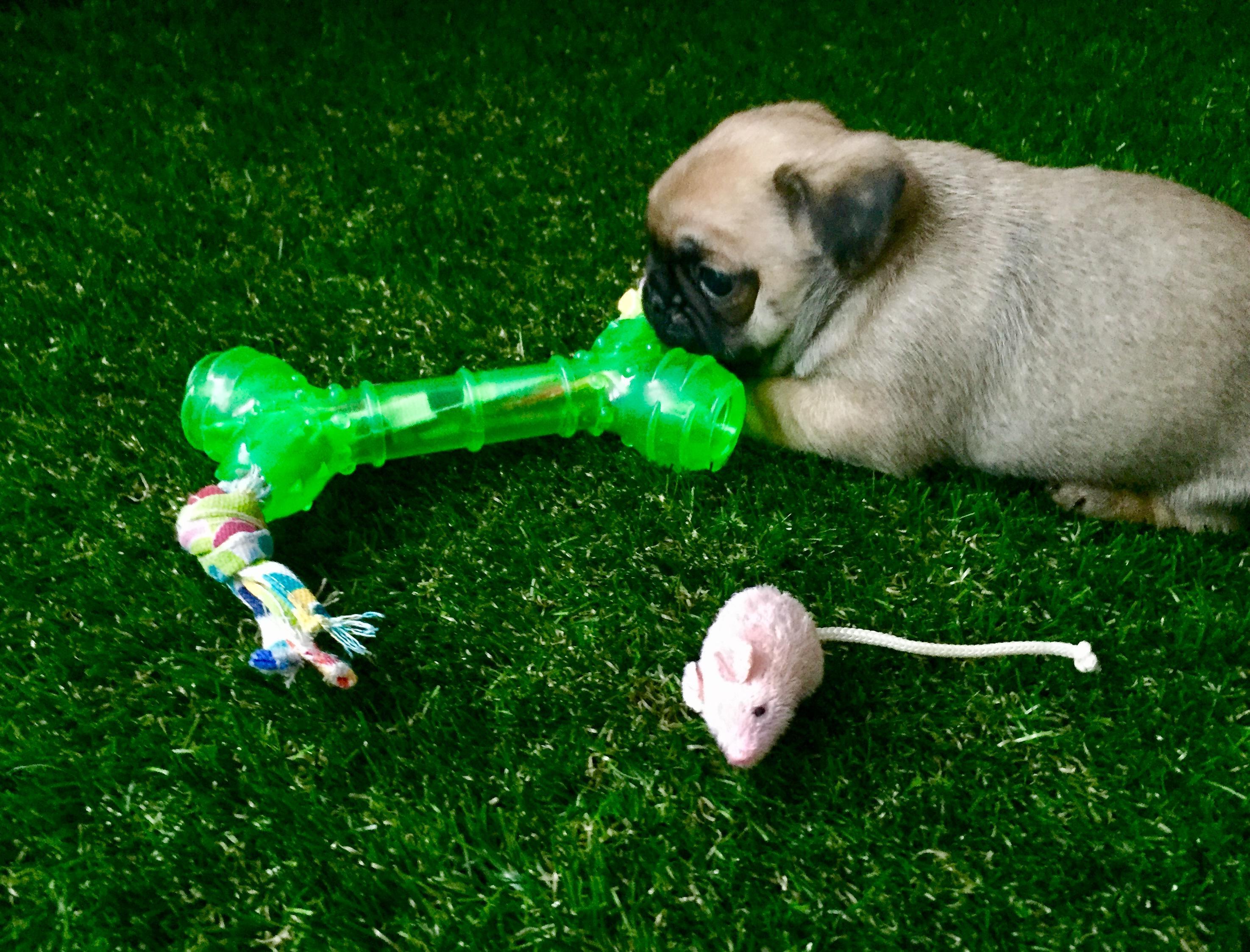 Pet Friendly Artificial Turf