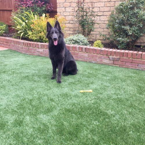 How to Install artificial turf for dogs