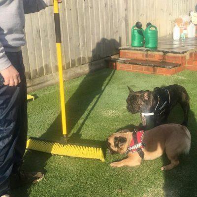 Pet Odour Eliminator For Artificial Grass