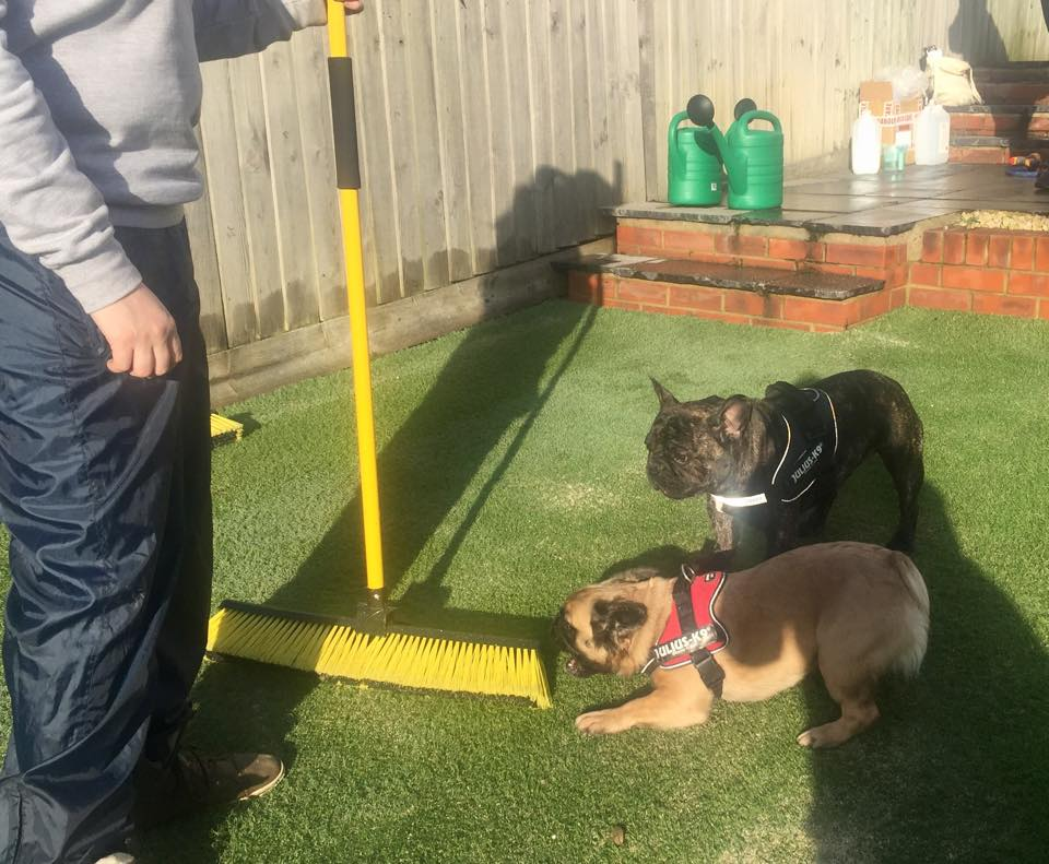 Pet Odour Eliminator For Artificial Grass