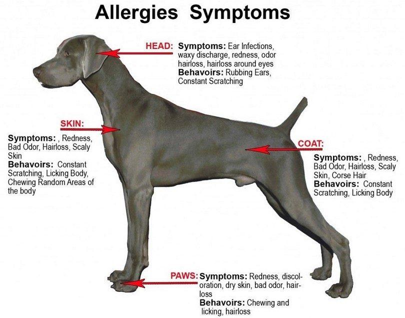 Dog Allergies From Latex Backed Artificial Grass