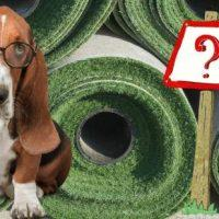 5 vital questions dog owners must ask artificial grass installers