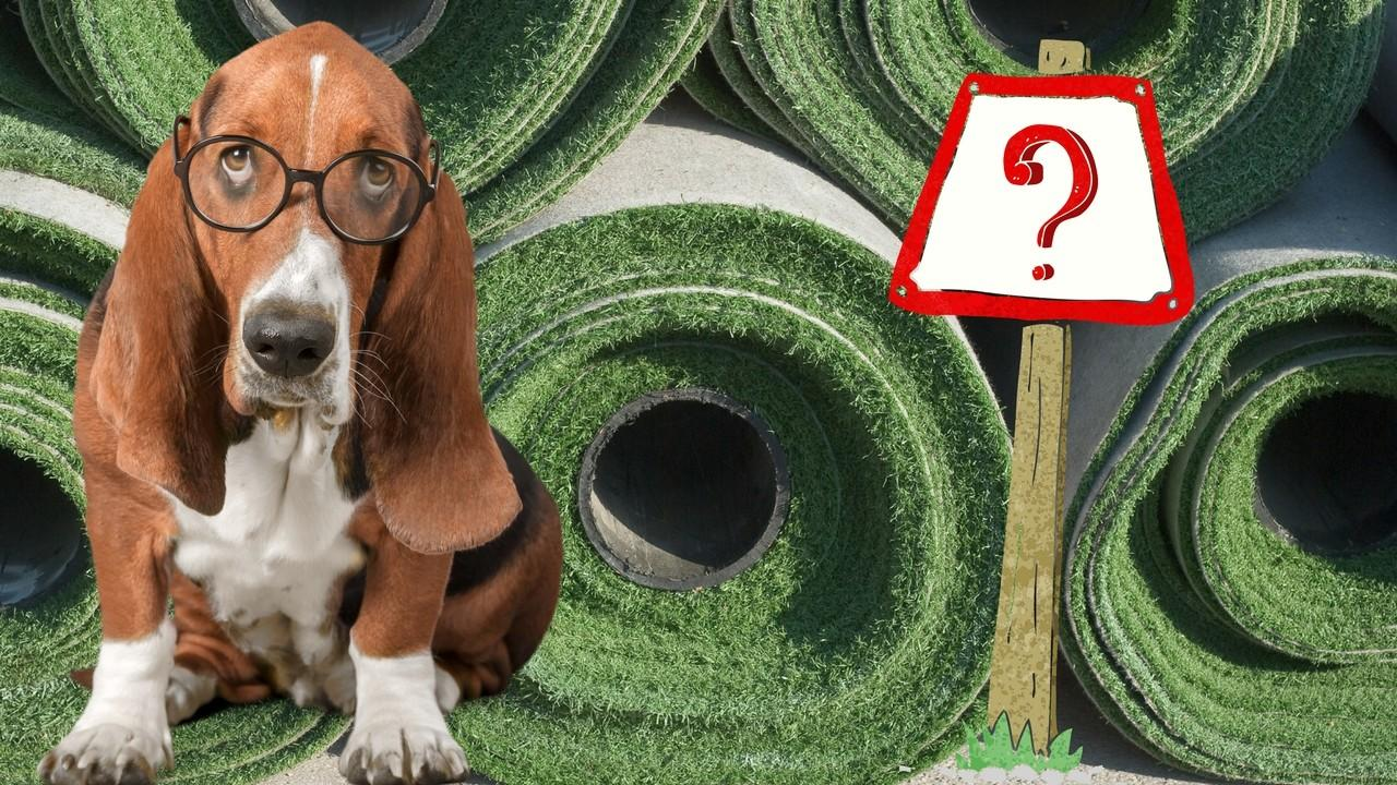 5 vital questions dog owners need to ark artificial grass installers