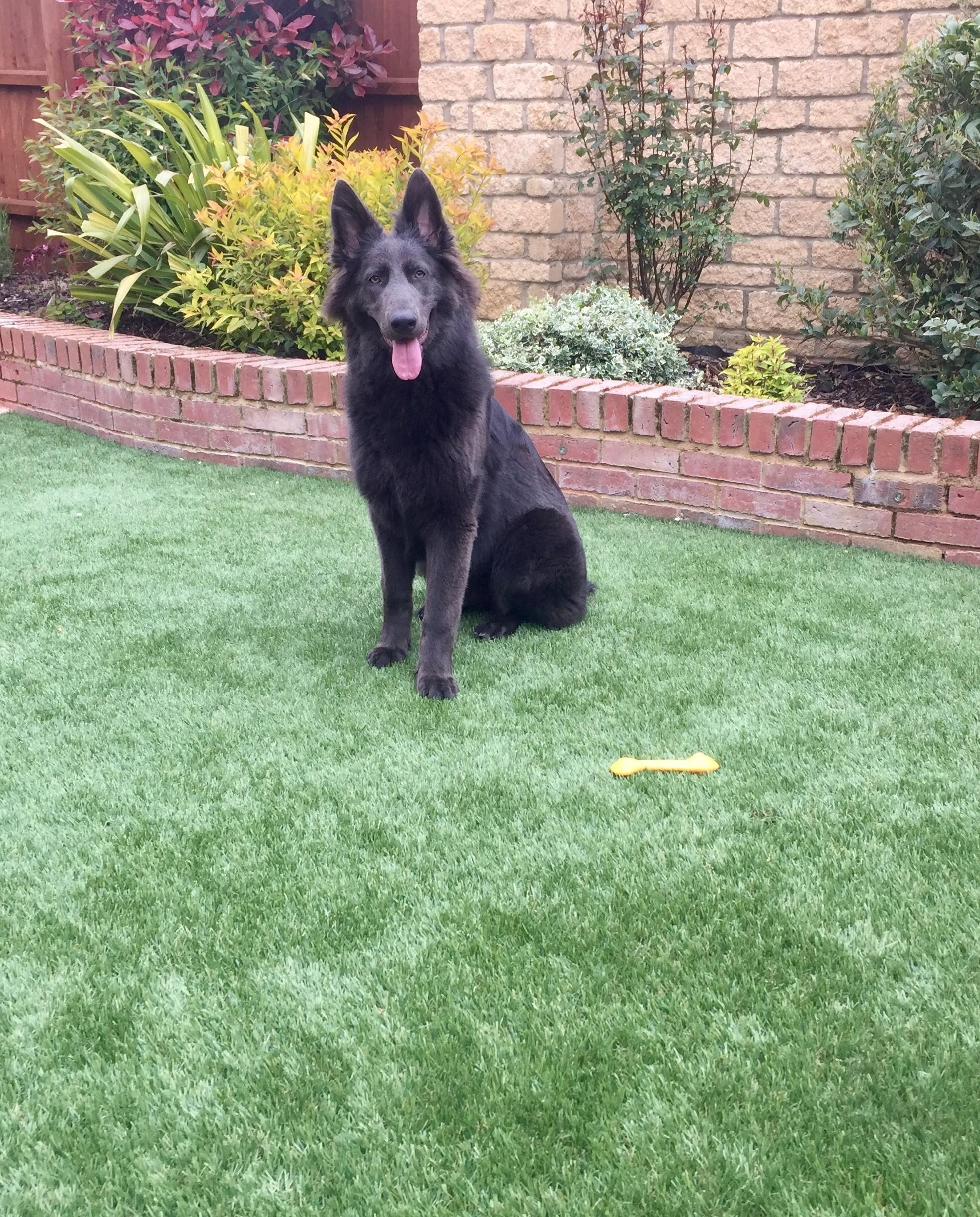 Can Dogs Wee On Artificial Grass