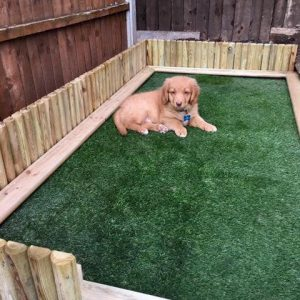 Champion polyurethane backed grass for dogs
