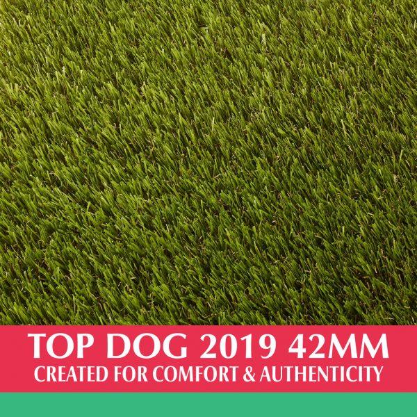 Top Dog 2019