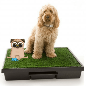Indoor or outdoor dog loo deluxe kit