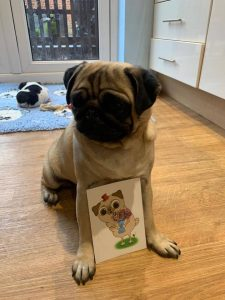 Cute Doggie with Top Dog Turf postcard